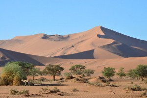 Sossusvlei Dunes in the Namib Desert